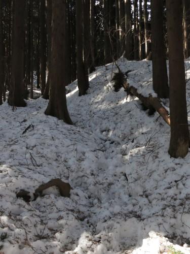 雪の陣馬高原~高尾山
