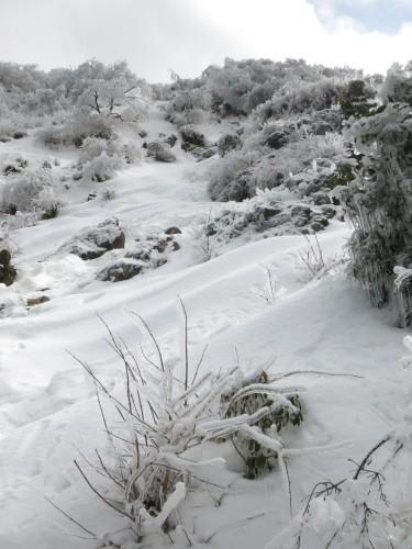 あらら、雪の丹沢表尾根