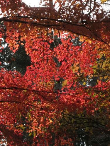 紅葉狩り 続きです。